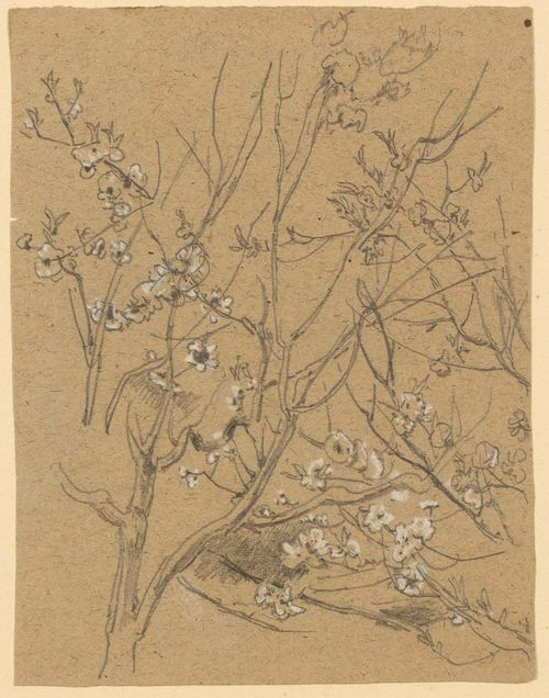 GILLE, CHRISTIAN FRIEDRICH (1805 Ballenstedt - 1899 Wahnsdorf bei Dresden) Tree in blossom. Graphite and white chalk. 18.9 x 14.3 cm.